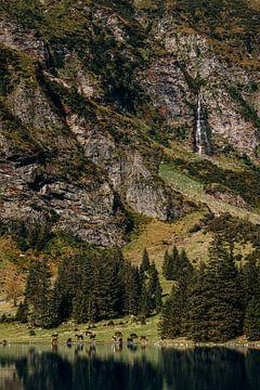 Pferde, See und Wasserfall in Österreich von Yvette Baur