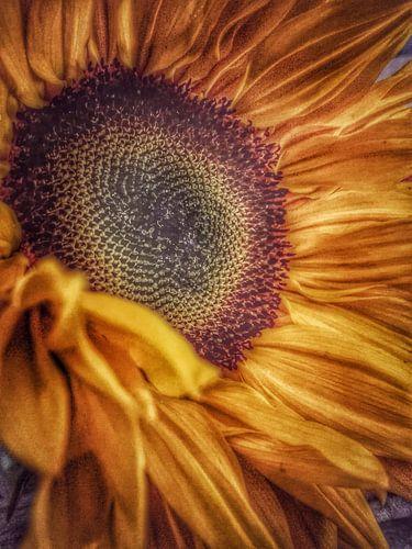 Close up van een zonnebloem van