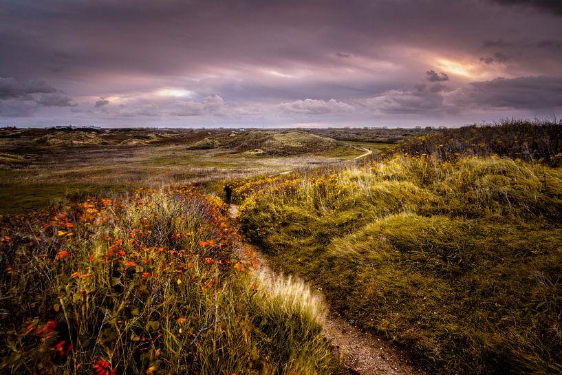Nature's Tracks van Martijn van der Nat