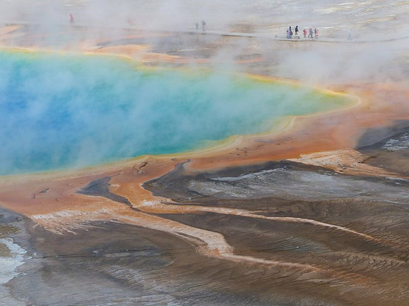 Grand Prismatic Spring Yellowstone National Park sur bird bee flower and tree