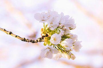 Frühling in Holland von Mascha Looije