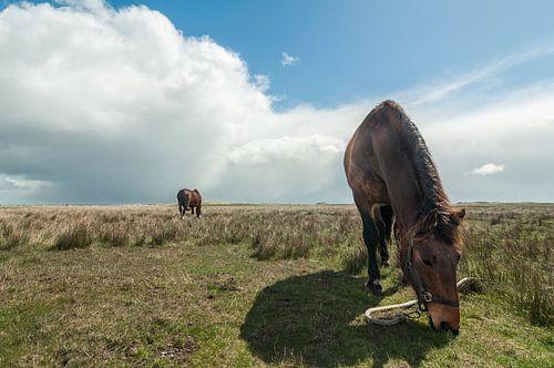 Paard op de Boschplaat van Albert Wester Terschelling Photography