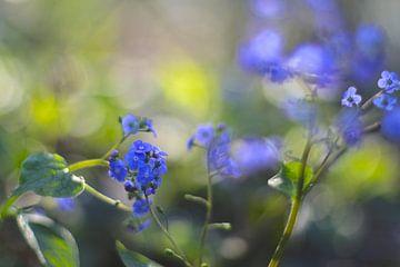 Frühlingsblumen / Vergiss mich... von Marianna Pobedimova