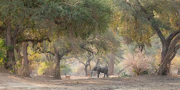 Olfant in magisch sprookjesbos van Anja Brouwer Fotografie
