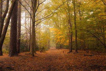 Gouden Herfst van Mireille Breen