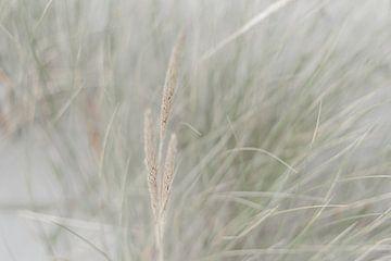 Beach Grass in the Wind, Dutch Dunes von DsDuppenPhotography