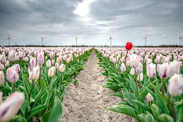 Donkere wolken boven een tulpenveld van Fotografiecor .nl