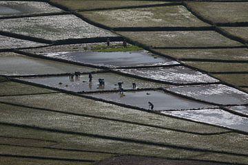 Spiderweb ricefields, Flores, Indonesia van Anne Ponsen