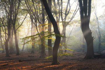 Zonneharpen tijdens herfst in het Speulderbos van Dennis Mulder