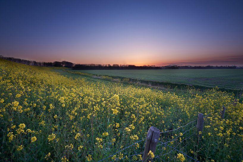 Feld mit gelben Blumen von Etienne Rijsdijk