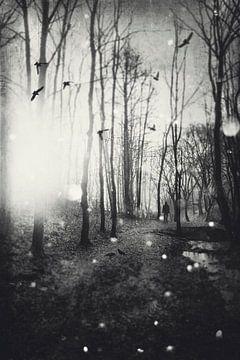 Weisses Licht von Dirk Wüstenhagen