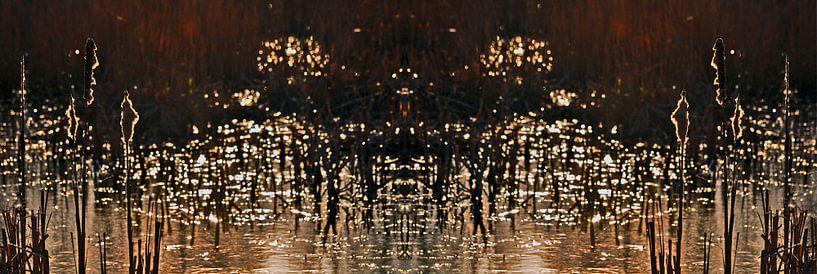 Riet in avondlicht van CreaBrig Fotografie