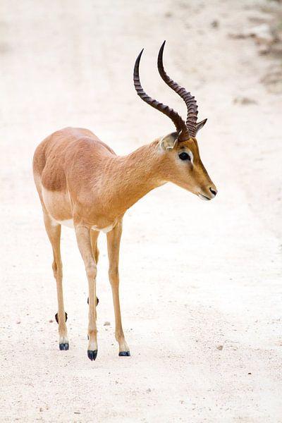 Impala van Jan van Kemenade