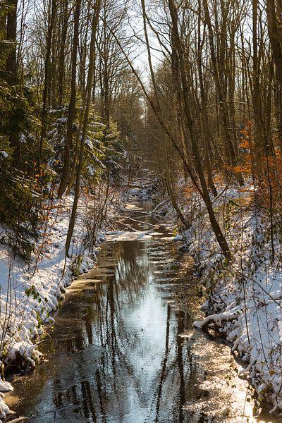 la forêt en boucle d'eau en hiver sur ChrisWillemsen