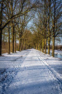 Zonsondergang met laan van oude bomen in de sneeuw van Erwin Floor