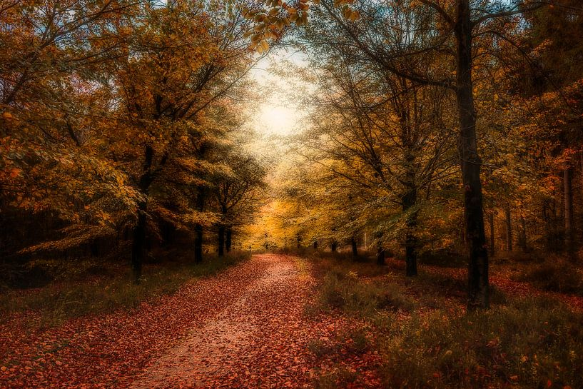 Herfst op de Amerongseberg van Joost Lagerweij