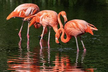 Flamingos von Uwe Ulrich Grün
