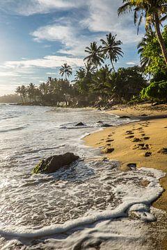 Tropischer Strand Sri Lanka von Roel Beurskens