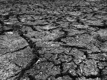 Trockener, rissiger Boden von Tim Lotterman Photography