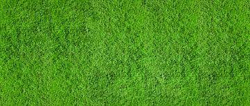 Grüner Rasen von Günter Albers