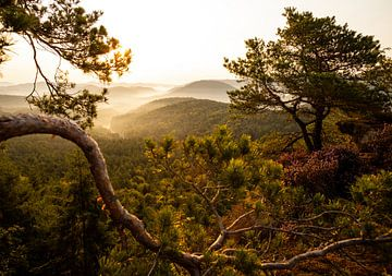 Germany pine forest lookout - fog mood - sur Jiri Viehmann