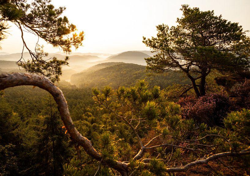 Germany pine forest lookout - fog mood - van Jiri Viehmann