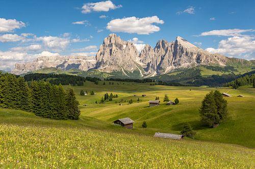 Summer on the Alpe di Siusi van Michael Valjak