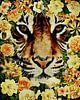 Flower Power Tijger van Jan Keteleer thumbnail