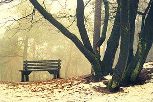sneeuwlandschap in het bos van