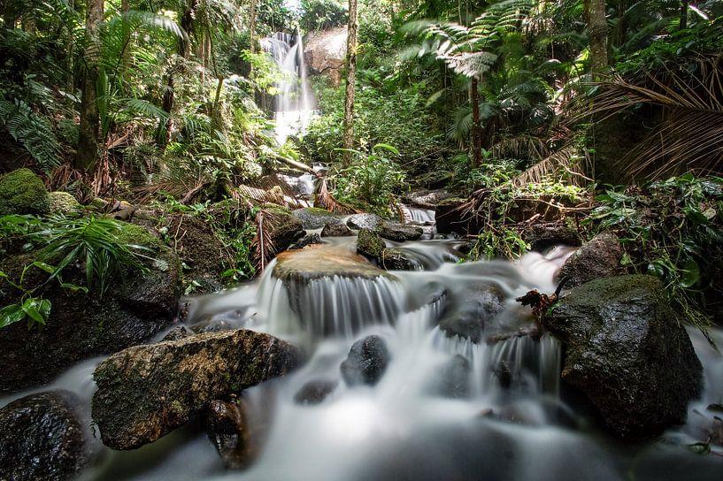 Tropisch bos van Remy De Milde