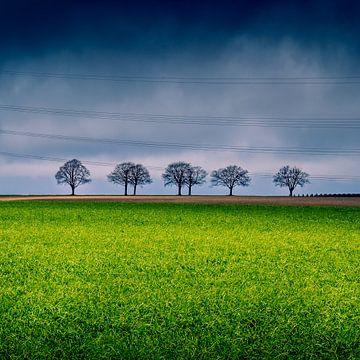 5 bomen op een rij van Jeroen