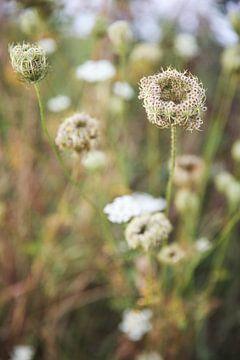 Des fleurs des champs ! sur