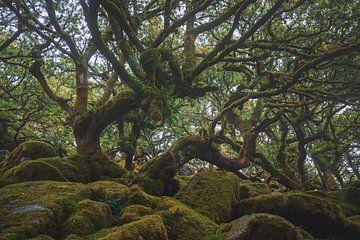 Forêt du sage sur Joris Pannemans - Loris Photography