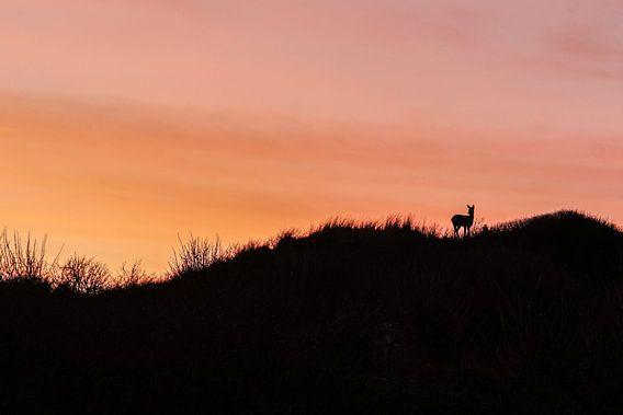 Ree bij zonsondergang in duin