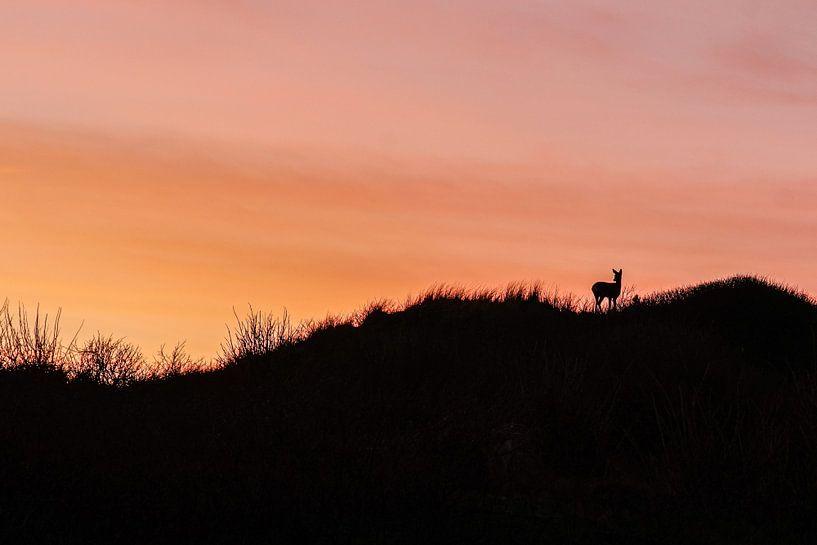 Ree bij zonsondergang in duin van Dirk van Egmond