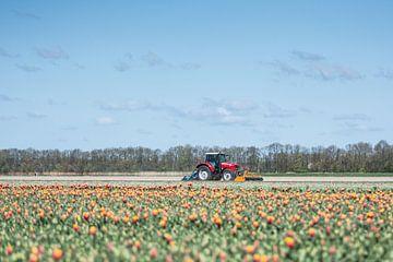 Tulpen op de boerderij sur Marco Bakker