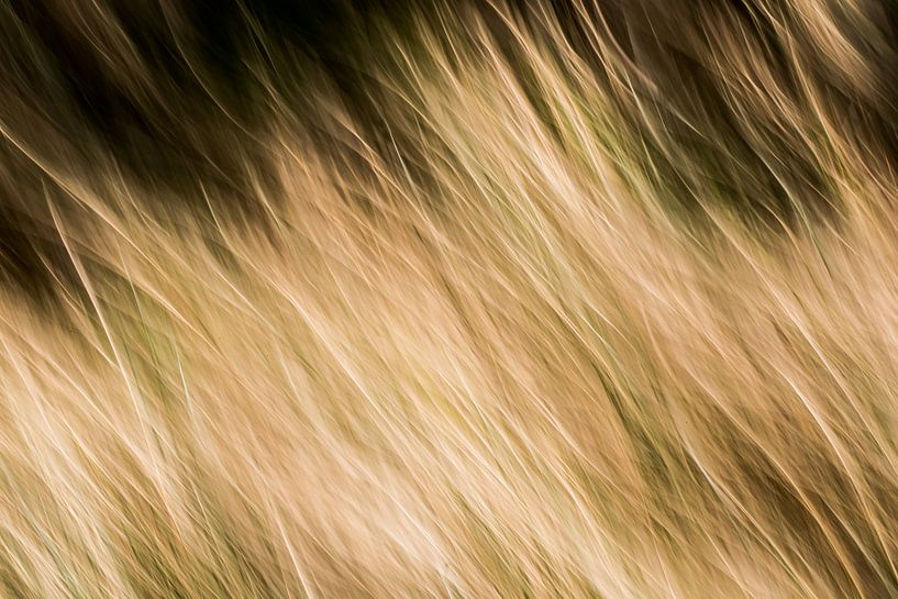 bewegend riet  van Jovas Fotografie