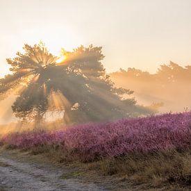 Zonnestralen en mist op de bloeiende Heide van John van de Gazelle
