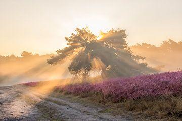 Sonnenstrahlen und Nebel auf der blühenden Heidelandschaft von John van de Gazelle