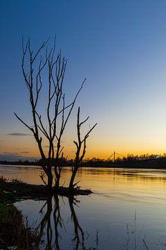 Silhouette van een boom in de maas tijdens een koude zonsondergang in de eijsderbeemden nabij Maastr van Kim Willems