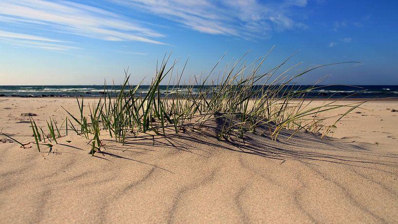 Sandwellenpanorama sur Ostsee Bilder