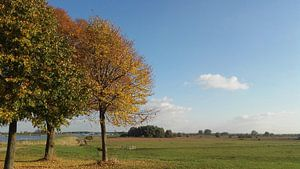 Herfstbomen in rivierlandschap