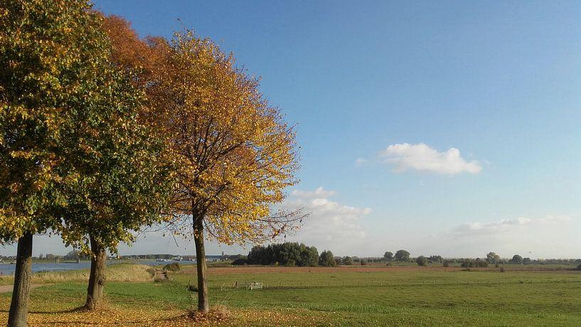 Herfstbomen in rivierlandschap van Rinke Velds