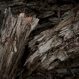 Dood hout van een gebroken tak van Jenco van Zalk
