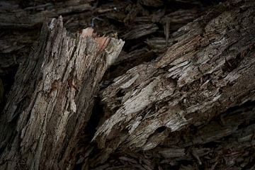 Totes Holz von einem abgebrochenen Ast von Jenco van Zalk