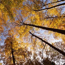 De gouden kleuren van de herfst van Marijke van Eijkeren