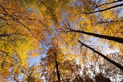 De gouden kleuren van de herfst van