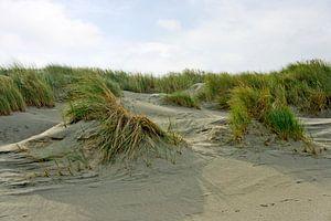 Weißdüne auf Langeoog