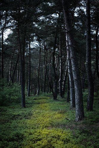 Donker bos van Erik van Rosmalen