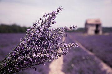 Lavendelfeld von Tonny Visser-Vink